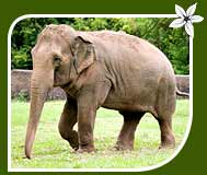 Wildlife Tour of Indian Elephant