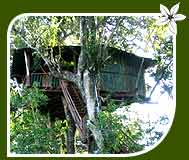 Jungle Camp Resort, Dandeli