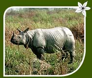 Wildlife Tour of One Horned Indian Rhino